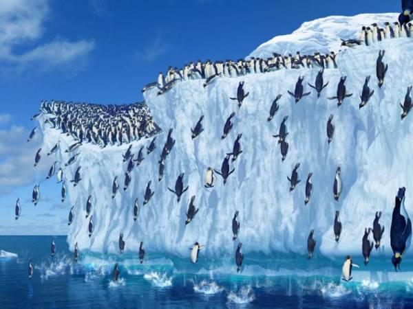 Антарктида. Коренные жители Антарктиды. Пингвины Антарктиды фото