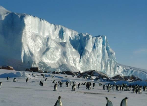 Антарктида - шестой континент. Животные Антарктиды фото. Пингвины Антарктиды фото
