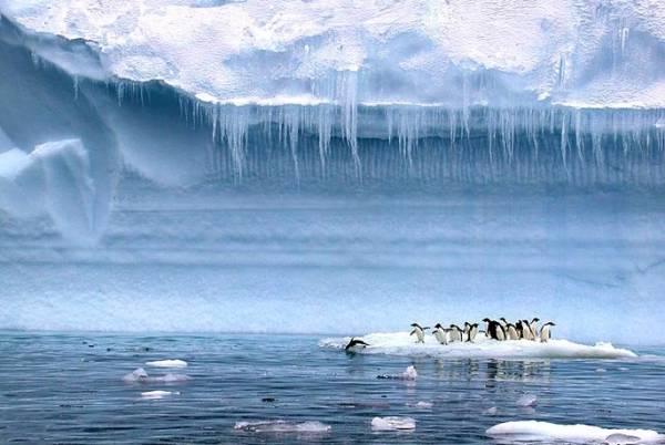 Антарктида. Пингвины Антарктиды фото